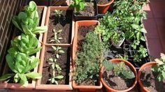 Algunas pautas y trucos para evitar, o al menos intentarlo, que el huerto del balcón y las plantas que llevas meses cuidando se sequen durante los días que vas a pasar fuera.