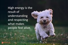 4 Practices Guaranteed to Energize Tired Teams Happiness Meaning, Happiness Quotes, Dog Training School, Fb Quote, Leadership Tips, Leadership Development, Feeling Frustrated, Praise God, What Is Like