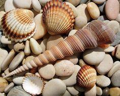 Shells | Flickr - Photo Sharing!