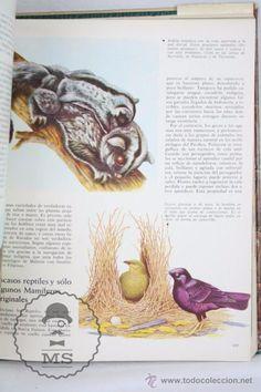 Libros de segunda mano: Libro Naturalia. Enciclopedia Ecológica Ciencias Naturales. Vol III. La Fauna Silvestre - Codex,1965 - Foto 6 - 50515355