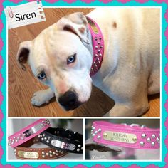 Siren looks absolutely fantastic in her new collar!!! Thanks so much! http://www.kippyandco.com/products/leather-cone-stud-dog-collar