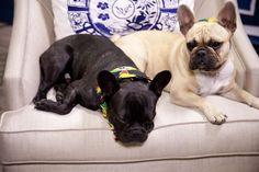 French Bulldog Bob & Bella