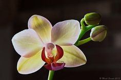 orchid Photography by Mark Seaver