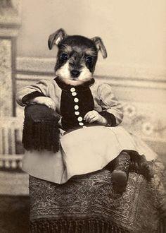 Miniature Schnauzer #Puppy #Dog