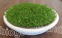 Comment faire germer les graines mucilagineuses comme le basilic ? - Blog cuisine bio - Recettes bio Cuisine bio sans gluten sans lait