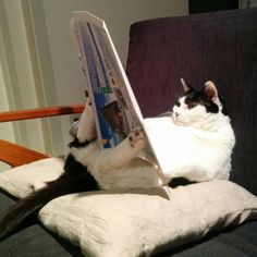 おっさん猫の日課。