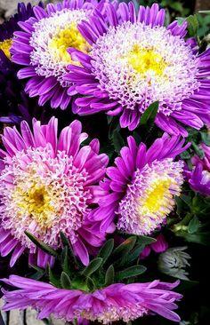 Intense purple flowers