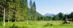 Ausflug in den Cumberland Wildpark in Grünau im Almtal Mountains, Nature, Travel, Golden Eagle, Wild Horses, Red Deer, Wild Boar, Muscovy Duck, Miniature Goats