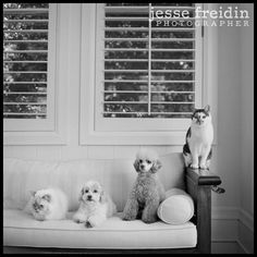 #dogs #black #white #photography.  Do this with kids and pets, from small to big