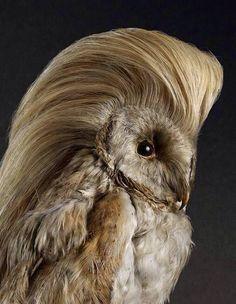 13. Vou ao salão e o cabeleireiro faz tudo ao contrário do que eu pedi e me pergunta se gostei. 19 vezes em que taxidermias erradas expressaram seus sentimentos - Mega Curioso