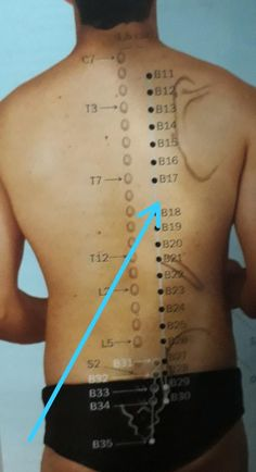 Acupuncture Points Chart, Acupressure Points, Cupping Therapy, Massage Therapy, Acupressure Treatment, Human Anatomy And Physiology, Traditional Chinese Medicine, Fitness, Physical Therapy Student