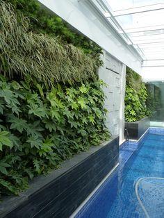 Amamos este projeto do arquiteto Fernando Thunm com o nosso Jardim Vertical Canguru!