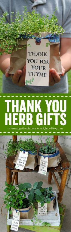 Thoughtful stamped tags & pretty fabric ties dress up plain potted herbs for Thank You Herb Gifts! They are perfect for teachers, neighbors and volunteers! #teachergifts
