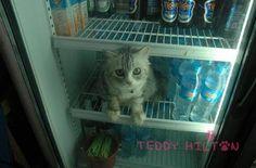 En la heladera del quiosco
