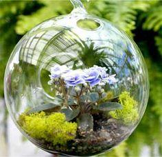 mini African violet hanging terrarium