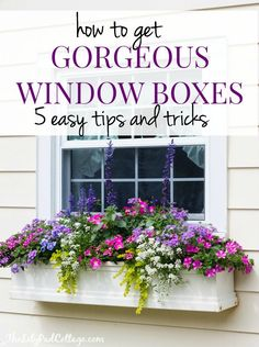 Gorgeous Window Box Tips from The Lilypad Cottage - Garden Design Window Box Plants, Window Box Flowers, Window Planters, Fall Planters, Fall Window Boxes, Balcony Flower Box, Front Porch Flowers, Front Porch Planters, Garden Planters