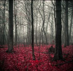 Crimson Forest Floor, National-Geographic-37