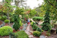 connifer garden
