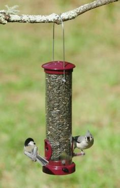 A nice, high quality nyjer feeder from Aspects. It has six perches and a tiny hole above each perch for the bird to access the seeds. The base is easily removed for cleaning. Wildlife Decor, Backyard Birds, Metal Casting, Bird Feeders, Berries, Seeds, Tube, Home And Garden, Cleaning