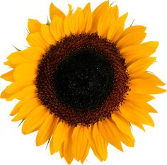 Sunflower I Google Symptoms I Just Need More Dogs Gift