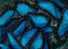 El Despertar de la Mariposa: El significado espiritual de la Mariposa