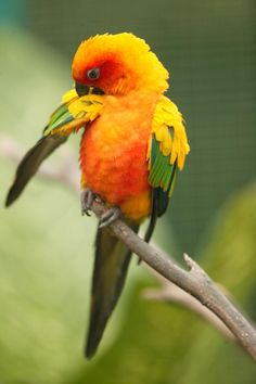 parrots of the world images - Google Search