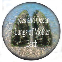 water and trees earths lungs