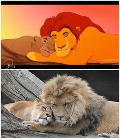 mufasa & Sarabi real