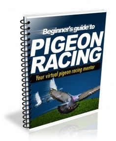 Necessary elements of a champion pigeon racing loft. | Pigeon Racing and Racing Pigeons Secrets | The Pigeon Insider