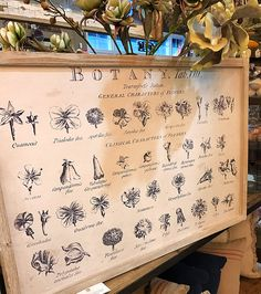 Vintage Botanical Boards | Boxwood and Barndoors