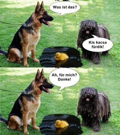 Lol, Humor, Funny, Animals, Animales, Animaux, Humour, Funny Photos, Funny Parenting
