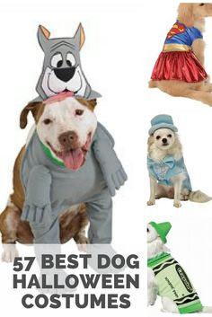 57 of the best dog halloween costumes. Funny, cute, and cheap costumes and outfits for dogs.