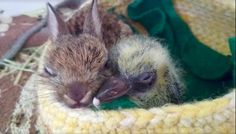 For the love of animals. Pass it on. Baby rabbit & pigeon tear down tiny walls to be together.