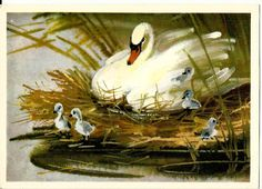 Vintage Russian Postcard Swans, chicks Printed in USSR Russia, 1980 Size: 14.8 * 10.5 cm