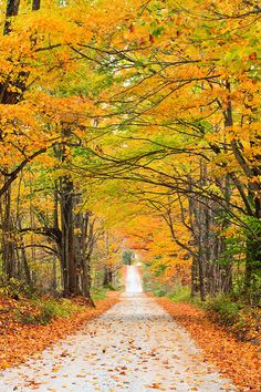 Autumn trail (Vermont) by Enzo Figueres cr. Fall Pictures, Fall Photos, Nature Pictures, Vie Simple, Les Continents, Autumn Scenes, Autumn Aesthetic, Nature Scenes, Amazing Nature