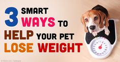 If your dog is already obese and in need of serious weight loss, joining a pet sports club might help him to lose weight faster. http://healthypets.mercola.com/sites/healthypets/archive/2015/02/12/risk-factors-pet-obesity.aspx
