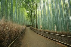 Sagano Bamboo Forest - northwest in Kyoto Basin, Japan