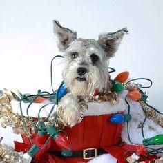 christmas pet photography - Google Search