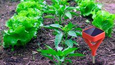 Garden sensor