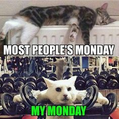 Forget doing delts on Caturday. Do'em on Monday. No shoulder pads required…