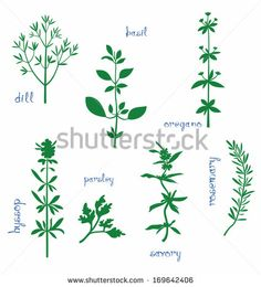 Silhouettes of dill, basil, oregano, hyssop, parsley, savory, rosemary.
