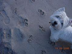 Kerri - I made paw print art in the sand!!!
