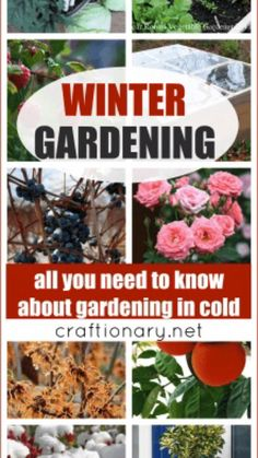 Winter Plants, Winter Garden, Container Gardening, Gardening Tips, Heating A Greenhouse, Garden Club, Home And Garden, Citrus Trees, Trees And Shrubs
