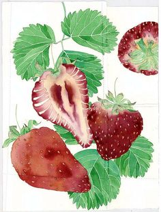 strawberries and leaves by Mango Frooty, via Flickr