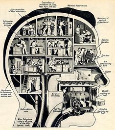 Fritz Kahn illustration. How the human head works. My general manager is probably kicking back, playing guitar... :-)