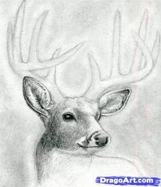 Die 42 Besten Bilder Von Reh Deer Drawing Draw Animals Und