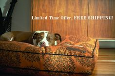 Enjoy FREE SHIPPING on every order with code SHIPFREE through Monday November 9th. Boy Dog Names, November 9th, Yorkshire Terriers, Dog Quotes, Dachshunds, Boxers, Dog Pictures, Picture Quotes, Dapper