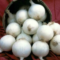 White Sweet Spanish Onion - Large sweet white onion with globe shape and mild flavor, so go ahead – slice it up raw! Good for green bunching or grows to 5 1/2″ in diameter. Not a long-term storage variety.