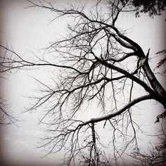 #WonderWatch 2015-8 Sky Ink #TreesPlease 1