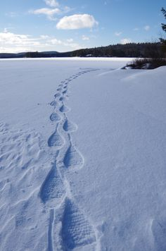 Algonquin Provincial Park is a great destination for snowshoe adventures.  Get out and make some tracks this winter.
